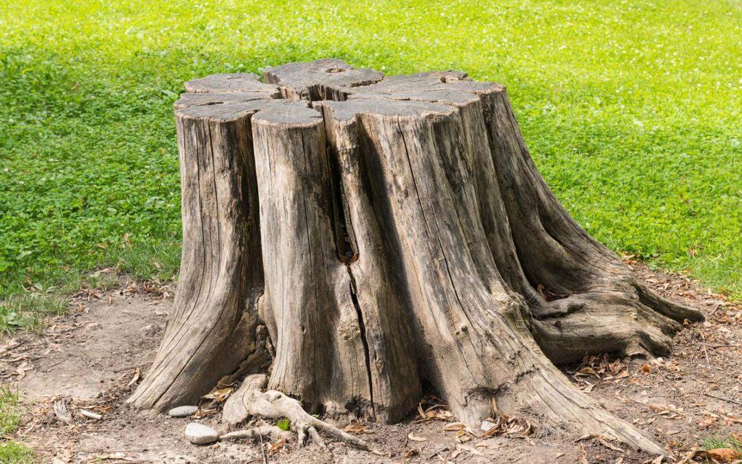 6 Reasons you Should Remove a Tree Stump