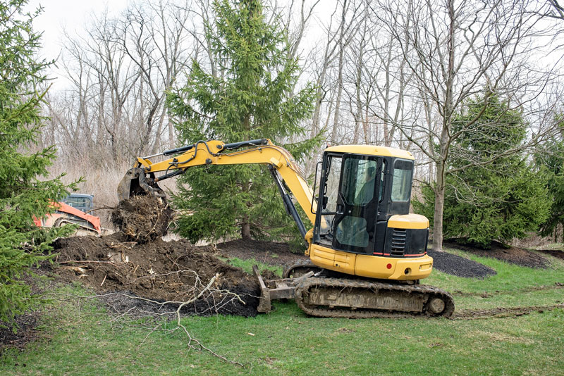 Stump Removal vs. Stump Grinding: the Pros and Cons