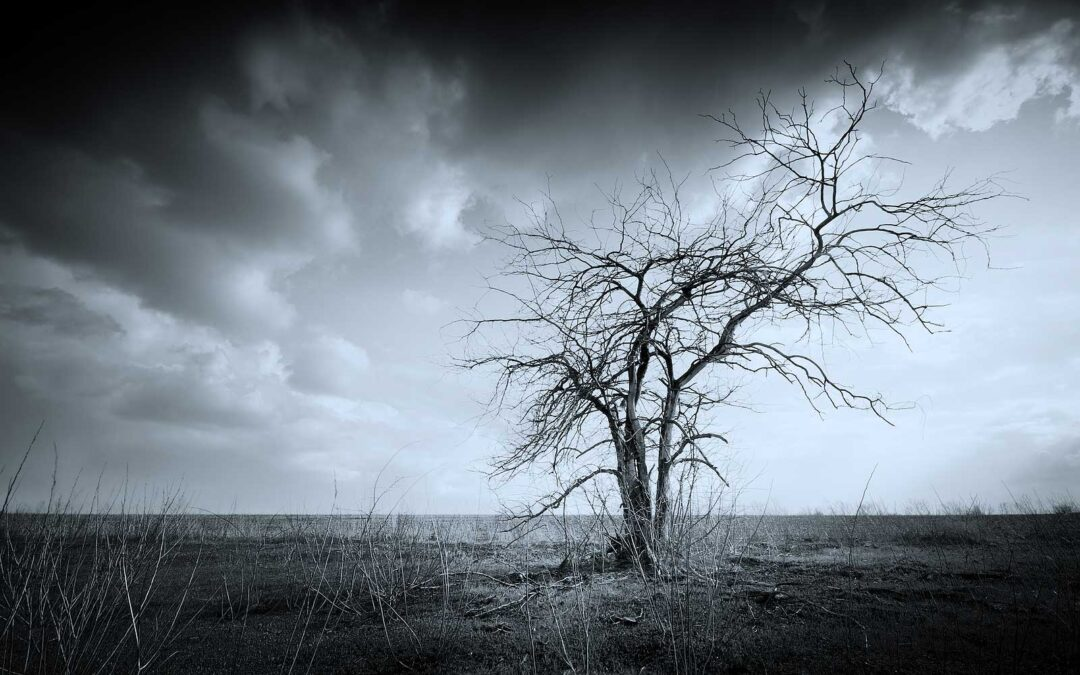 Four Signs that Your Tree is Dead